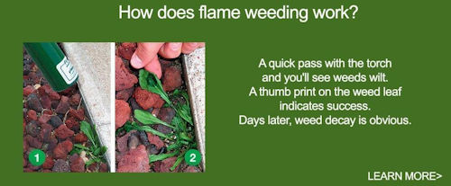 How does flame weeding work?