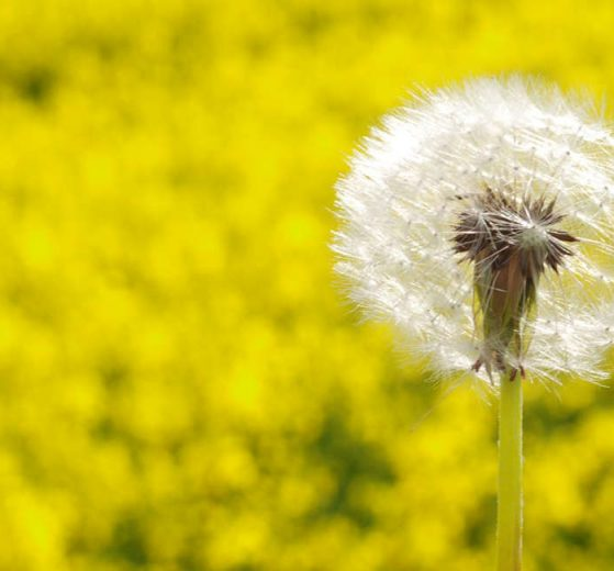 Using vitamins to help with allergies